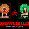 Friendship Compatibility for Taurus and Virgo using Astrology